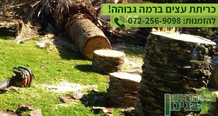 כריתת עצים עם אישורים